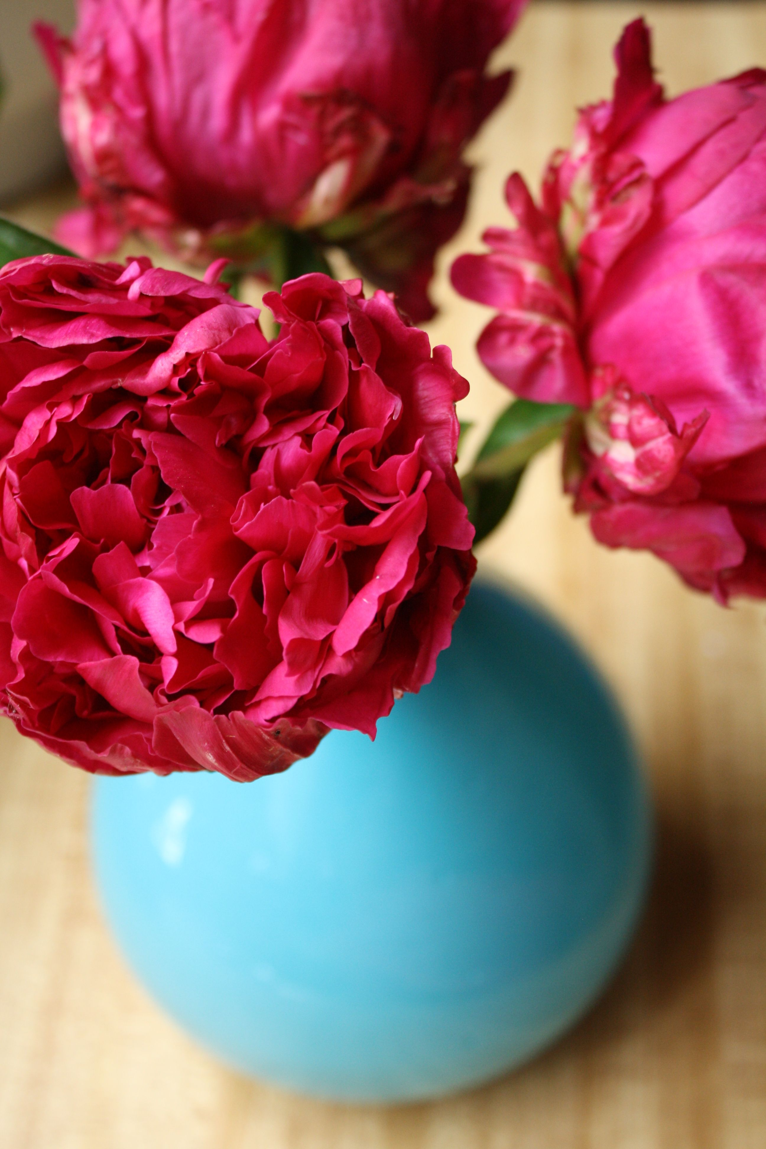peonies are lush and decadent