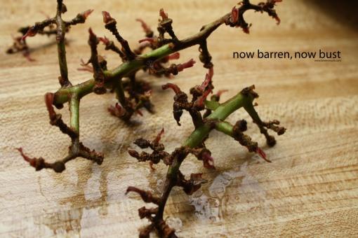 now barren now bust